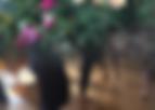 Screen Shot 2020-06-14 at 3.12.13 PM.png