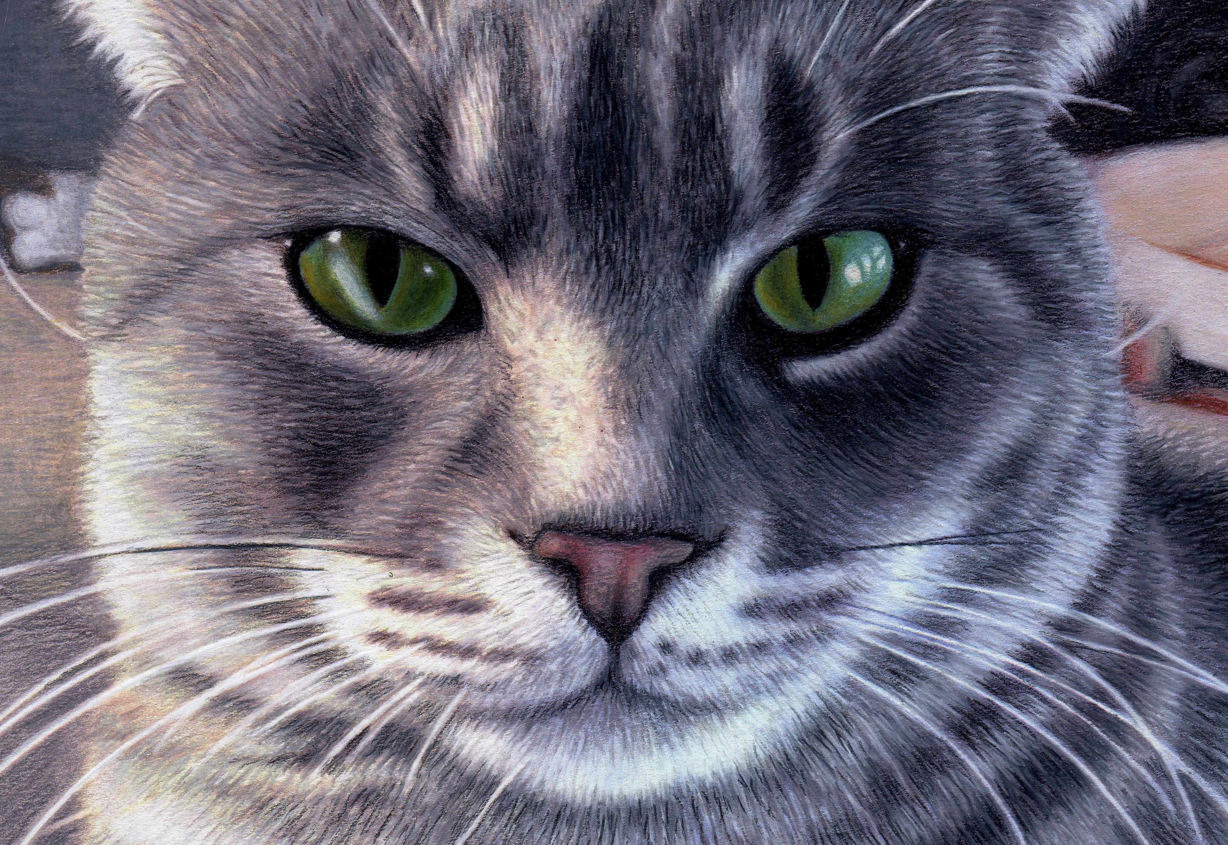 cropcat