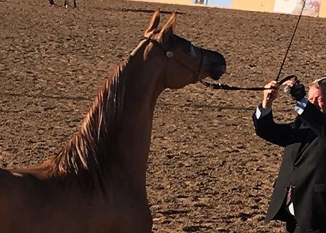 Kearsley Ranch Horse