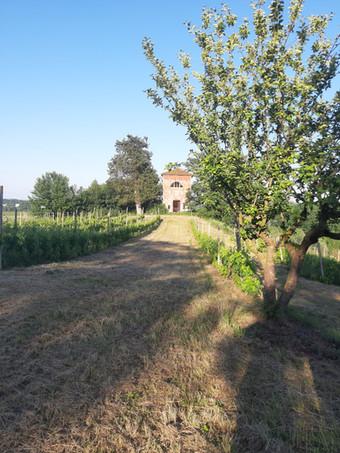 Vigna Sant'Emiliano.jpg