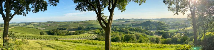 Vignale Monferrato.jpg