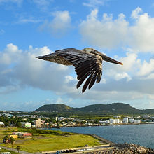 Basseterre Saint Kitts