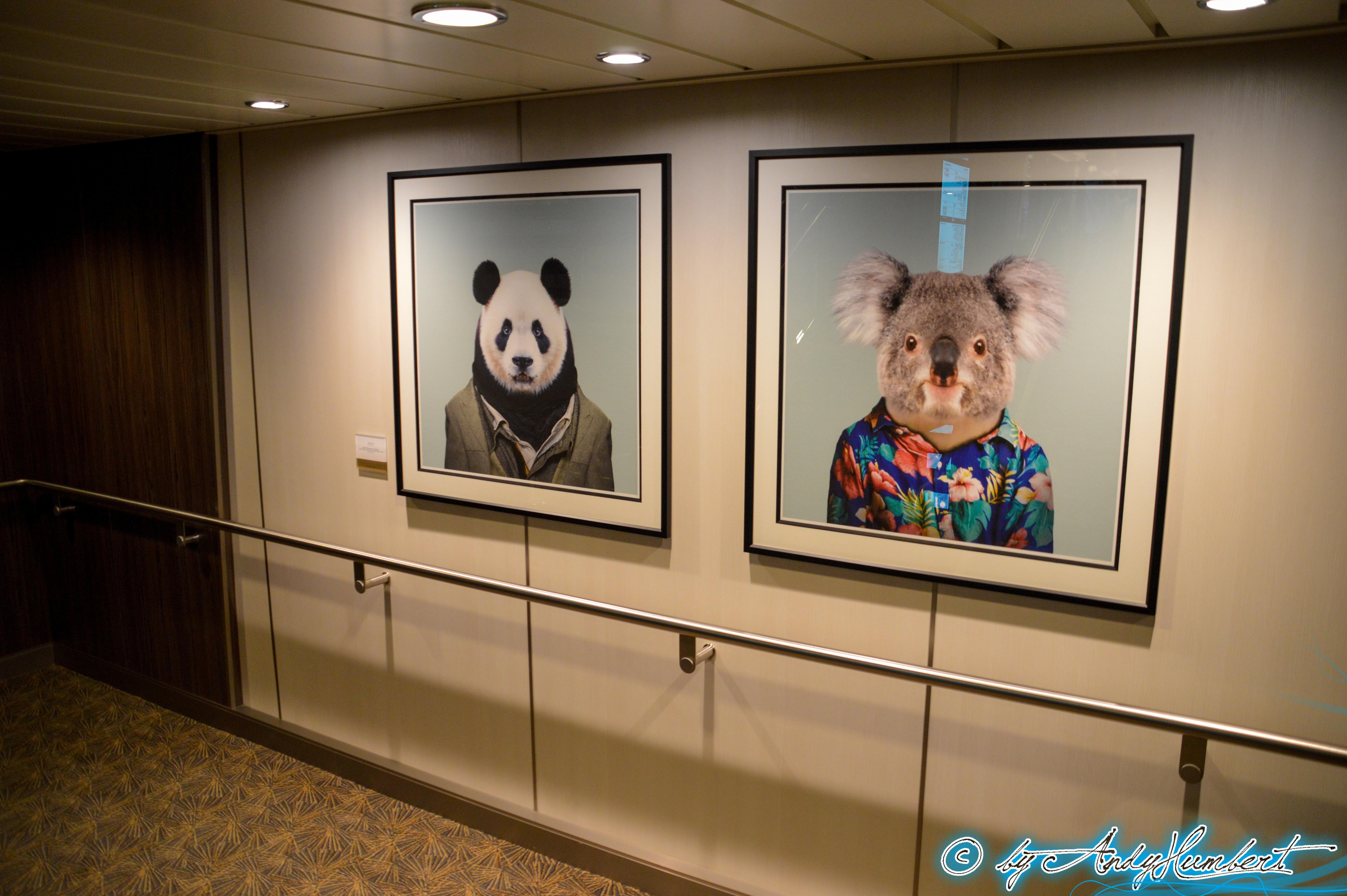 Giant Panda & Koala