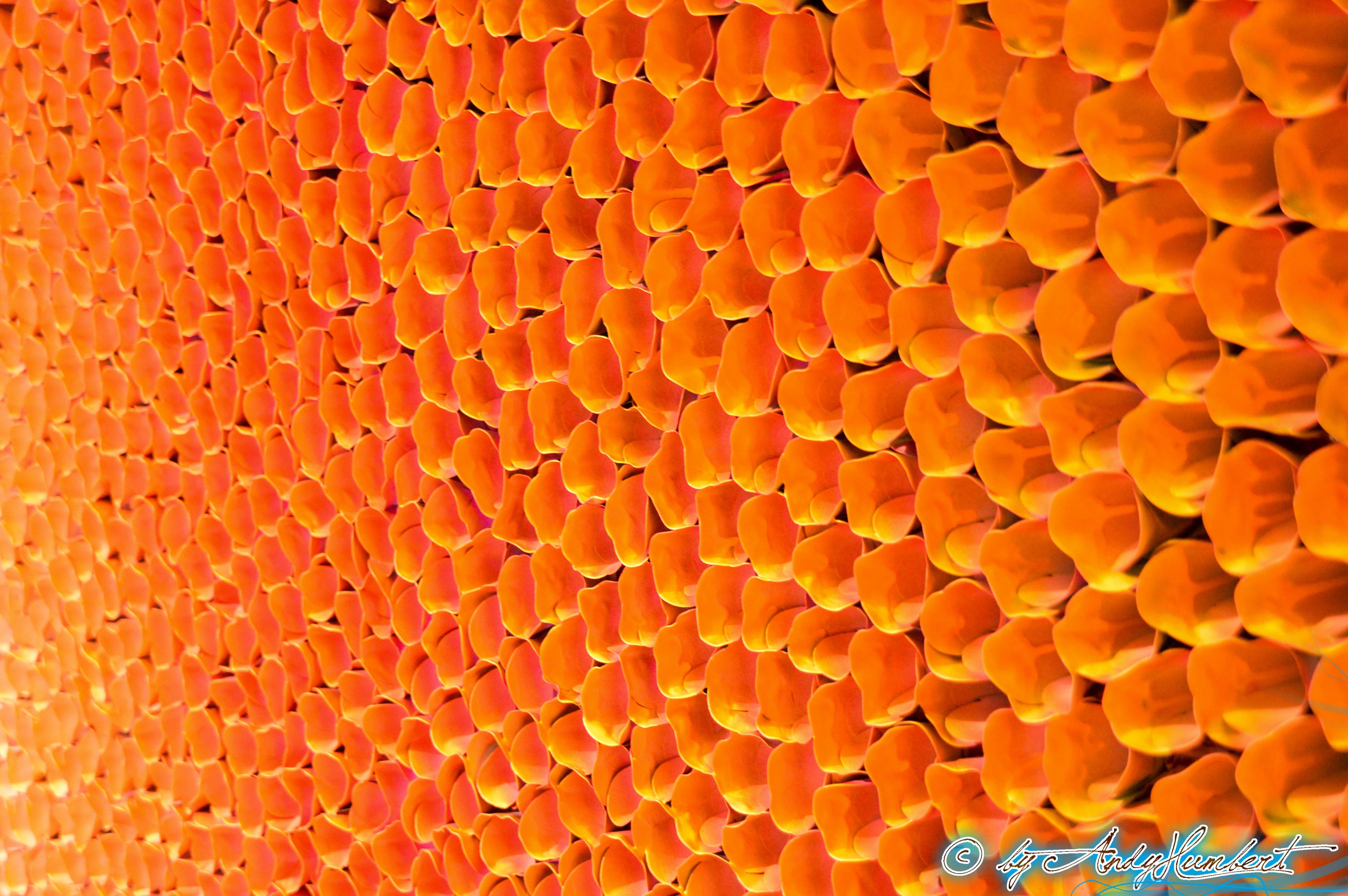 Flower Bed Series