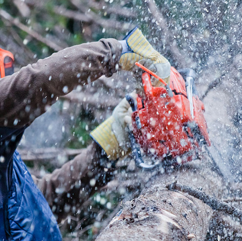 TREE REMOVAL MORE INFO>