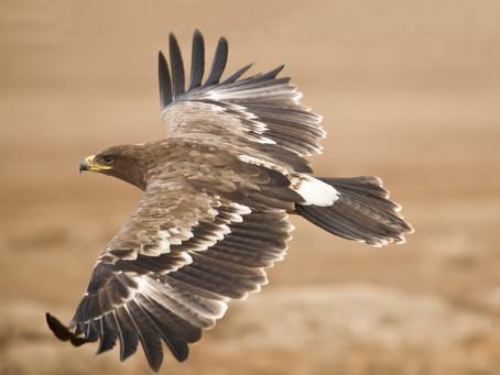 In volo su ali d'Aquila