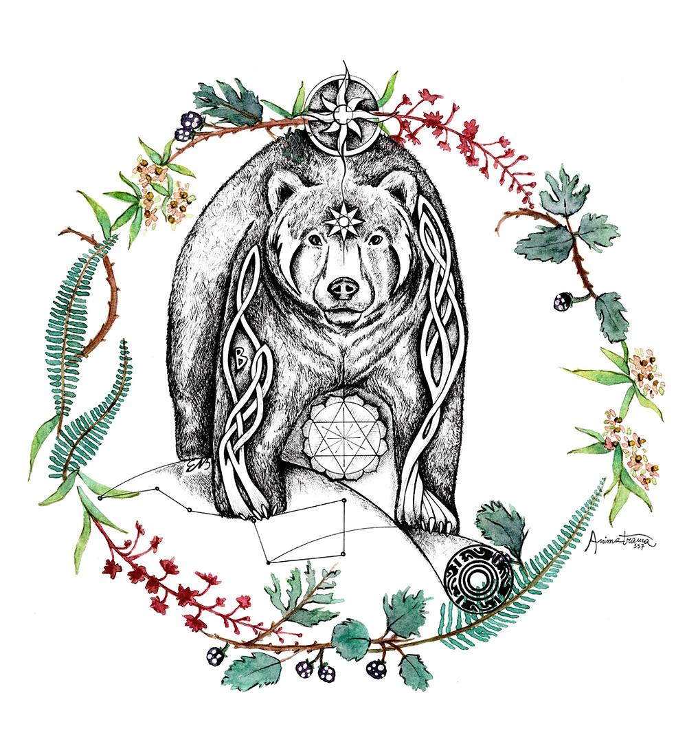 Disegno dell'Orso - Animale Guida