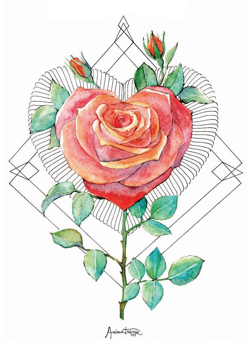 Disegno della Rosa