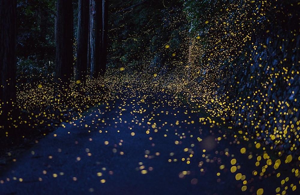 foto lucciole nel bosco