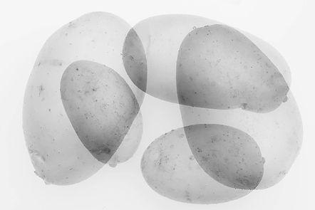 5 potatoes.jpg
