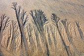 Sand Pattern 1.jpg