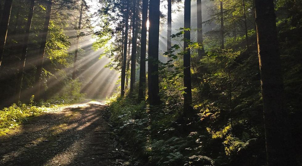 Wald Sonnenstrahlen fantastisch Fantasie Bäume Natur erleben träumen lesen autorin vanessa elleder bücher