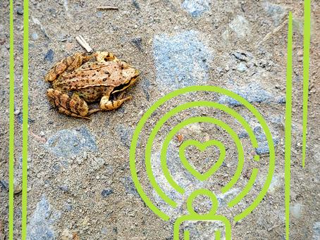 Die Seele und ein Frosch