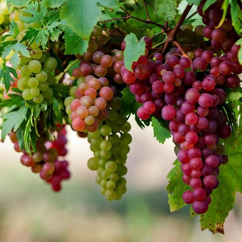 ADV Grape 10ml