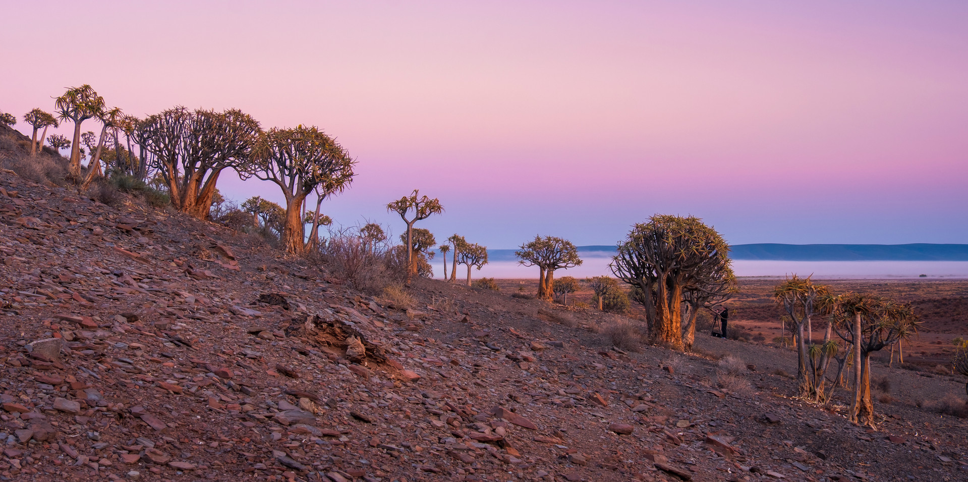 Gannabos Quiver Tree Forest Panoramic