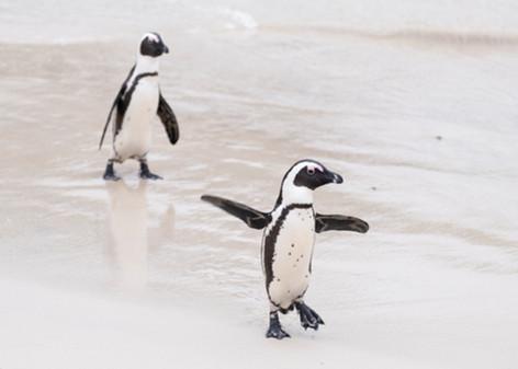 Penguins 3.