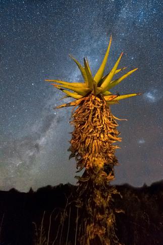 Aloes & Astro