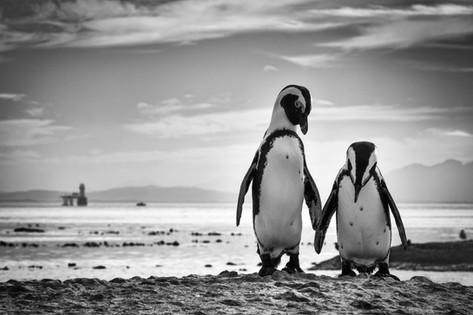 Penguins 4.