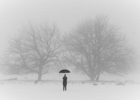 Trees & Snow 2.