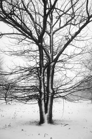 Trees & Snow 1.