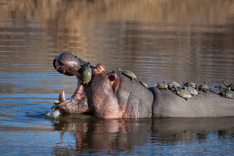 No congregating at the waterhole, please! 2.