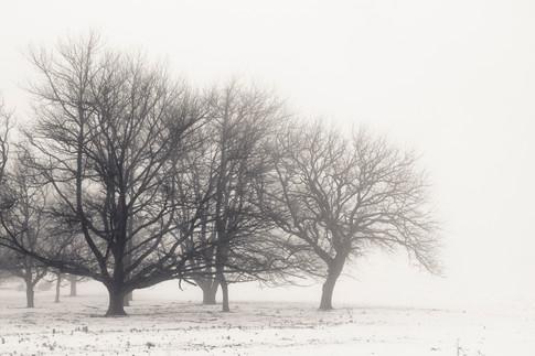 Trees & Snow 4.