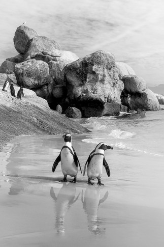 Penguins 2.