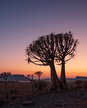 Gannabos Quiver Tree Forest 7.