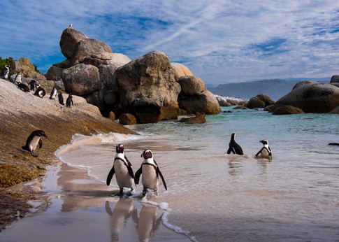 Penguins 5.