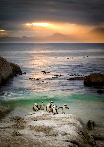 Penguins 1.