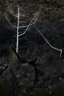 Alexandra TaupiacTrees of Ibiza #1-0.jpg