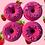 Thumbnail: Fresa
