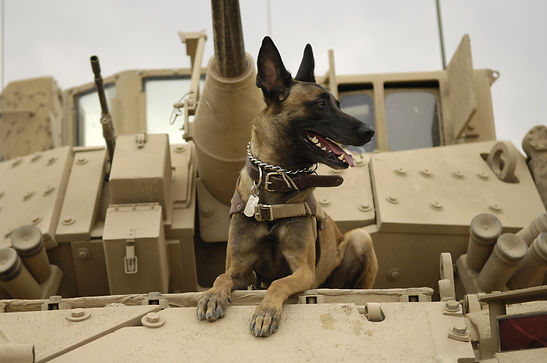 U.S._Air_Force_military_working_dog_Jack