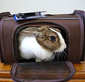 Come-Along-Rabbit-Carrier-2.jpg