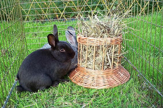 bunny-toys-008.jpg