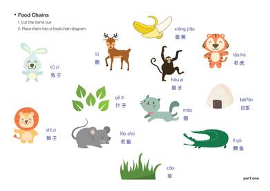 FOOD: Food chain diagram