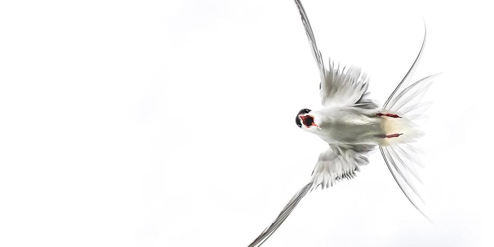 Voordracht Ann Coppens - natuurfotografie