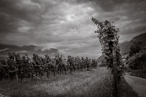 Zuid-Tirol low res-204.jpg