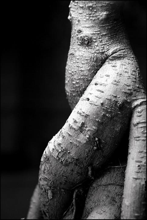 Myriam Hoebeke -1-.jpg