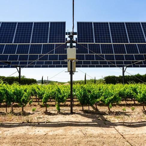 L'agrivoltaïsme, pour s'adapter au changement climatique