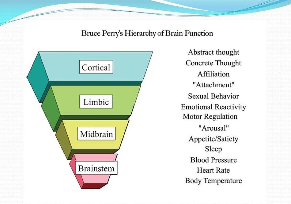 Neurosequential-Model-of-Therapeutics-96