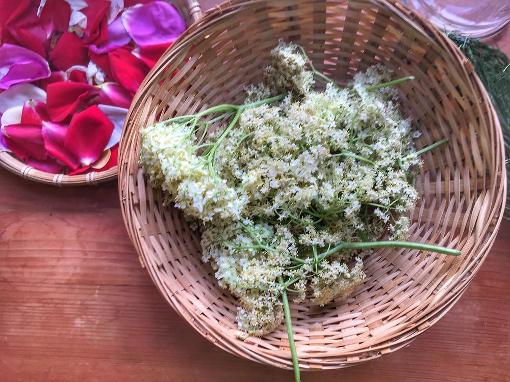 бузина, цветы бузины, самбука, сироп из цветов, сироп из лепестков