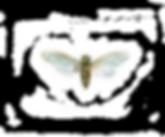 Cikados logo-01.png