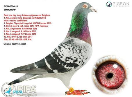 Wereldrecords in de vogelwereld