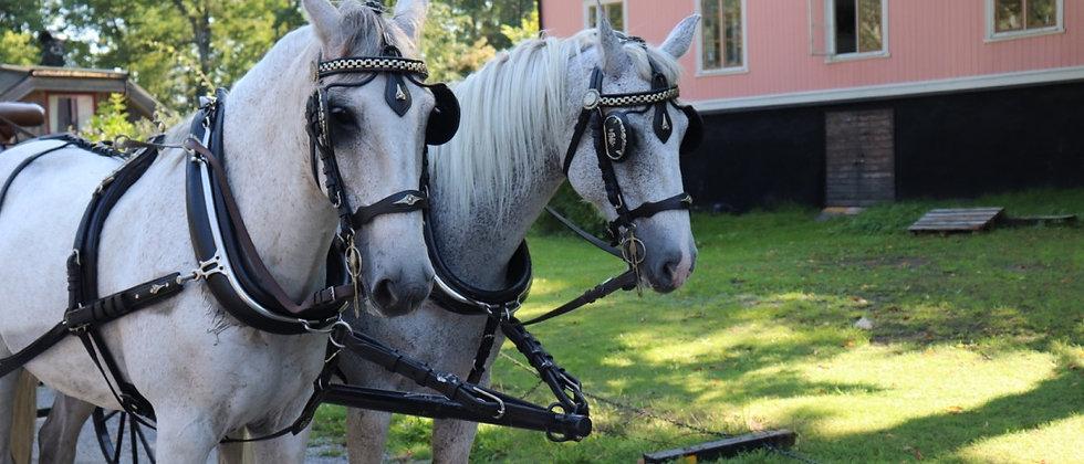 Häst & Vagn, 2 hästar