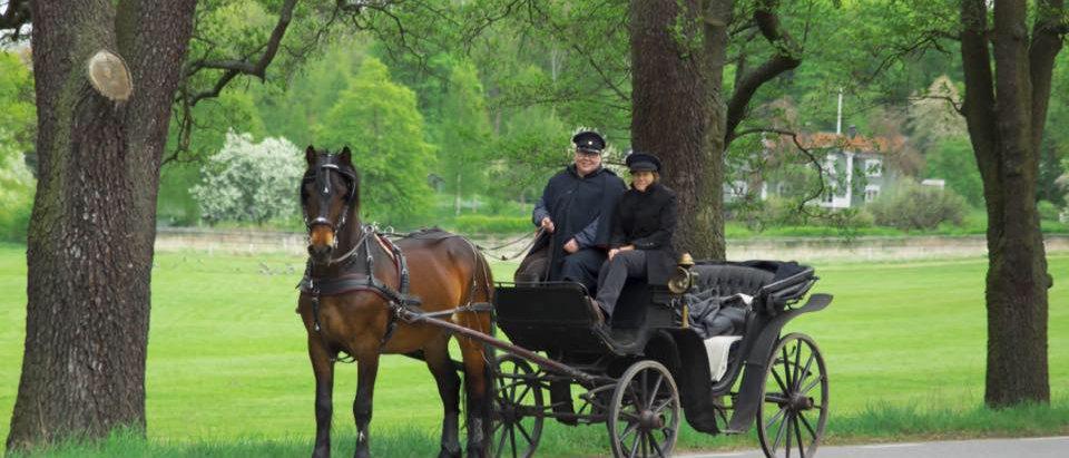 Kunglig tur med 1 häst & vagn