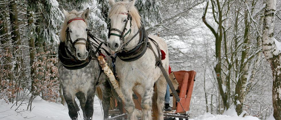 Slädtur med 2 hästar och släde