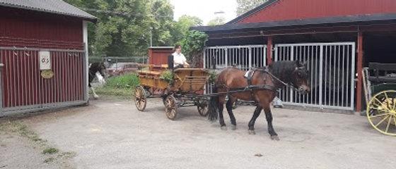 Häst & Vagn, 1 häst