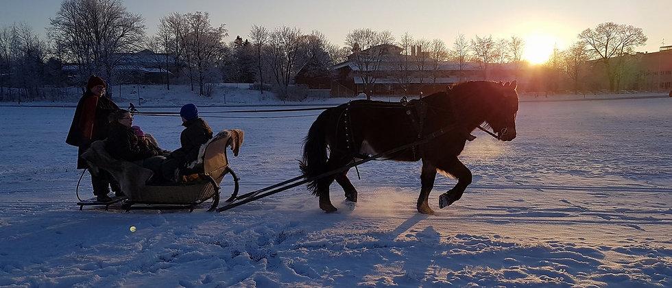 Slädtur med 1 häst och släde