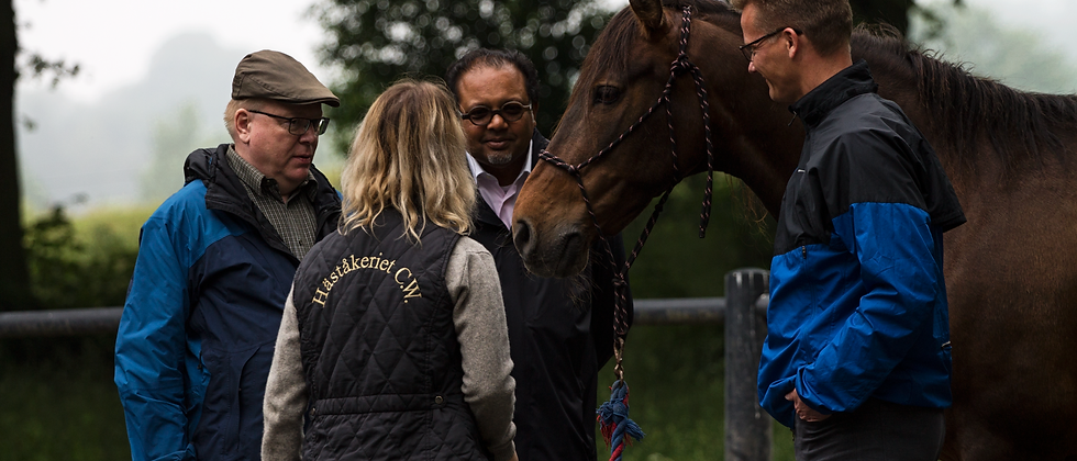 Workshop - Teamwork utifrån hästens perspektiv, ca 4 timmar